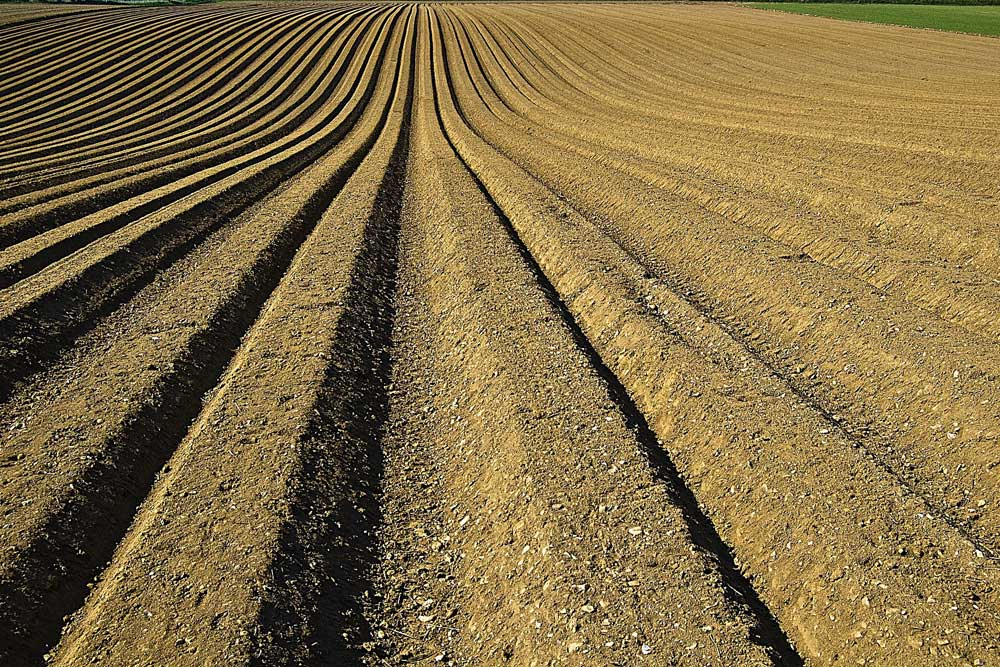 Ignore soil at your peril