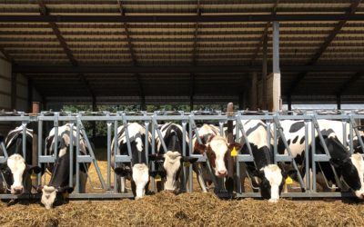 The polarity of American dairy farming