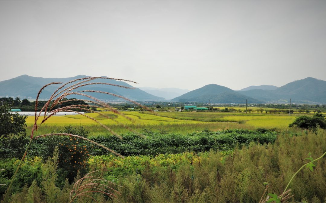 The self-help rural communities of South Korea