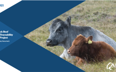 New QMS report reveals the potential of harnessing DNA to improve Scotch Beef PGI