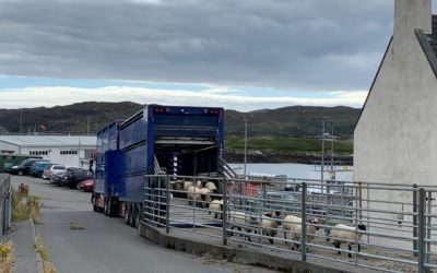 Scotland's red meat industry unites in opposition to transport consultations