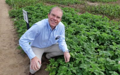 New products provide promising future for control of late blight