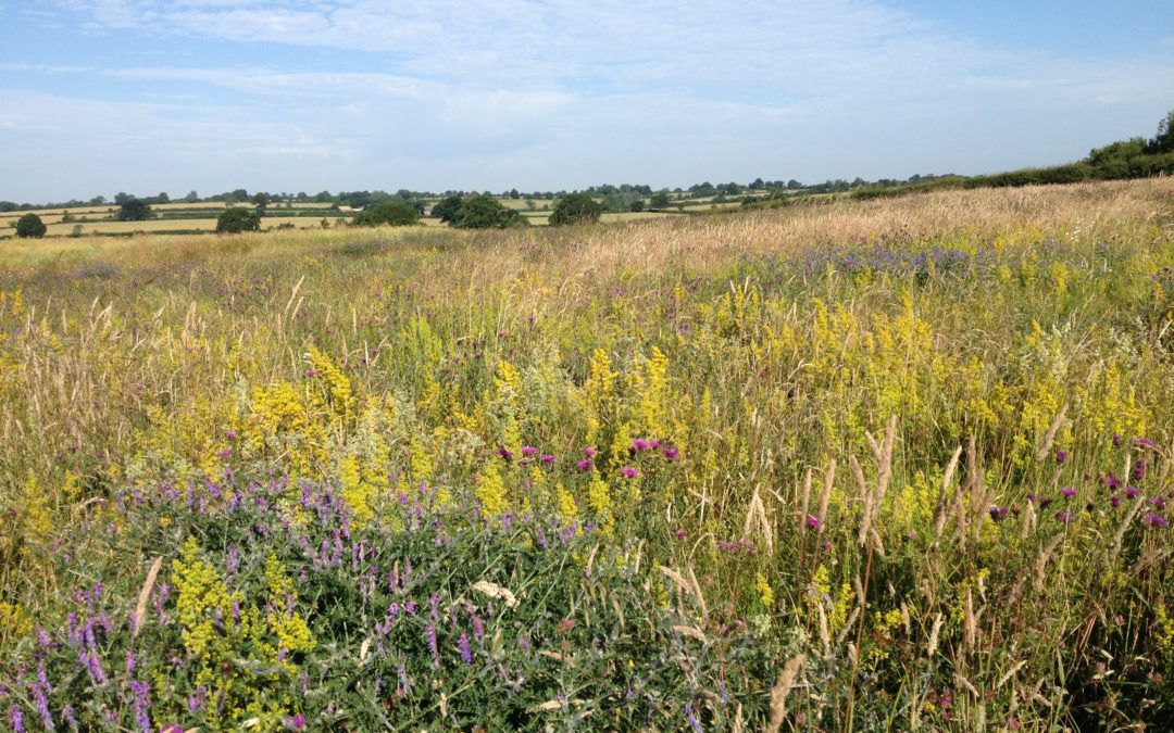 xarvio launches biodiversity planner