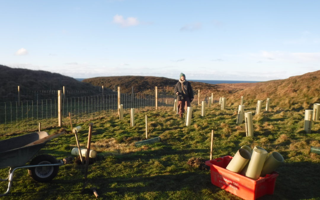 New entrants making the most of community-owned croft on Colonsay