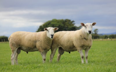 Spotlight shines on Aberfields for 'Great from Grass' 10th Anniversary Sale at Fearn