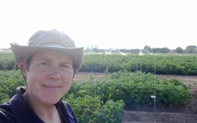 More monitoring and adaptability needed for successful late blight control